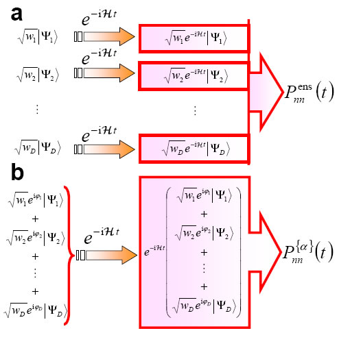 Schemes of the quantum evolution of an ensemble (panel (a)) and a pure-state (panel (b)). Each |phi_i> is a simple tensor product state. Both observable dynamics are indistinguishable  for large Hilbert spaces.